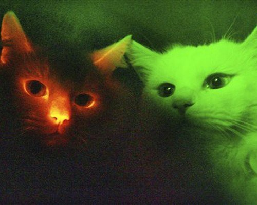 Color changing cats