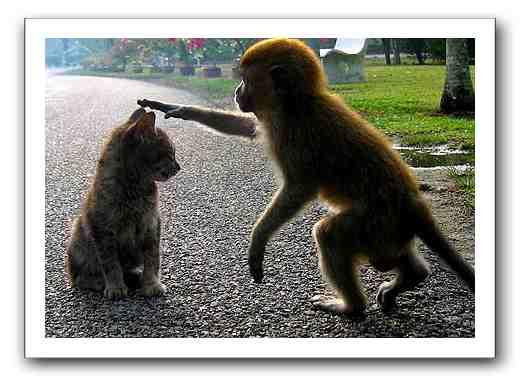 monkey petting a cat