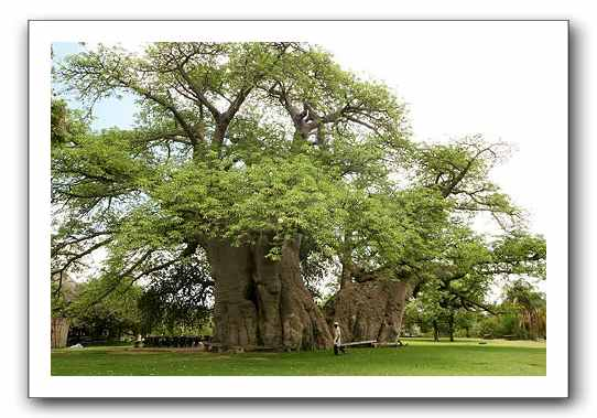 tree-bar.jpg